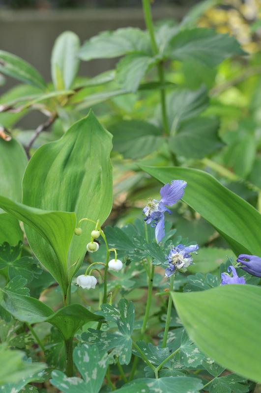 スズランの花です